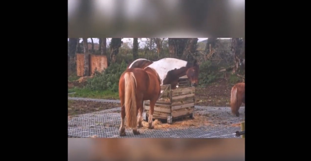 INB® Mudcontrol slabs - Equine Partnership